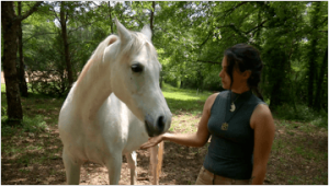 il cavallo allergico al fieno