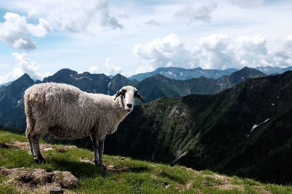 Viaggio in camper Gran Piemonte